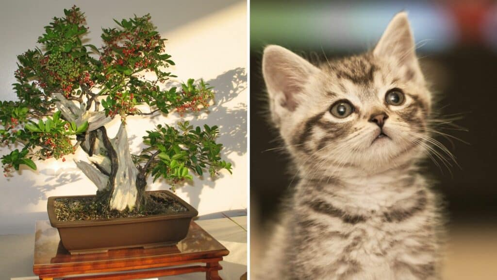 Bonsai Trees Safe for Cats