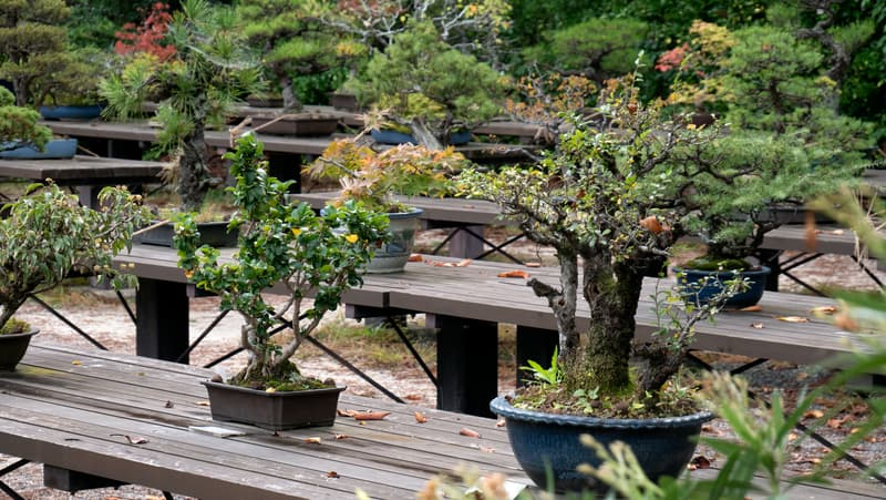 Put the bonsai trees on the bench