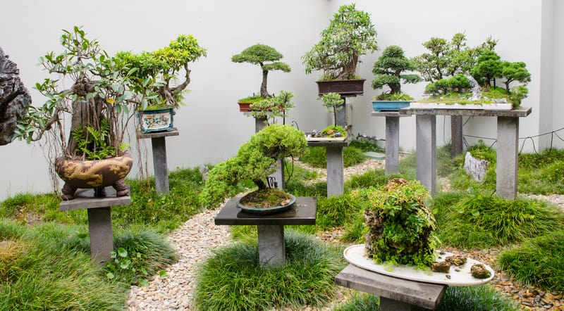 Can You Use Miracle Grow on Bonsai Trees