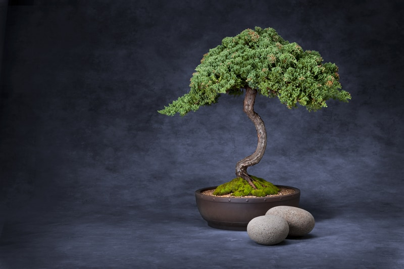 are bonsai trees easy to take care of