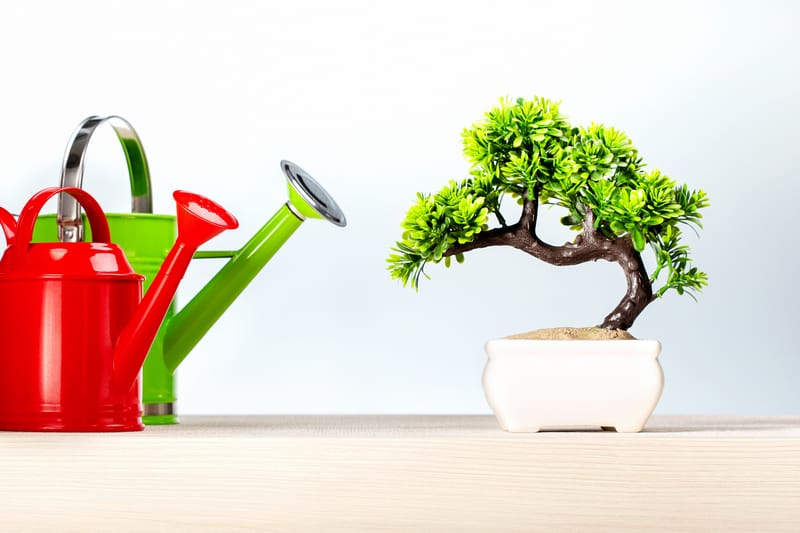 How Much Water Should You Give Your Bonsai Tree