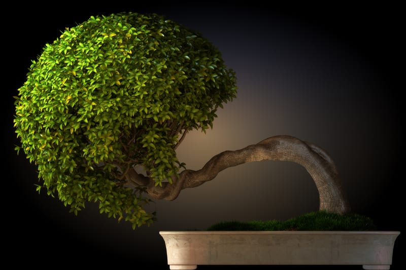 Steps to Help Your Bonsai Grow Faster