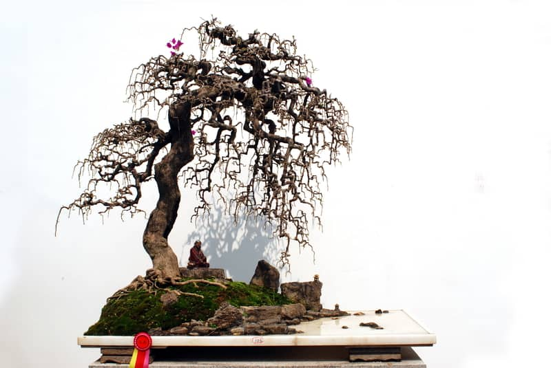 What Are the Fastest Growing Bonsai Species