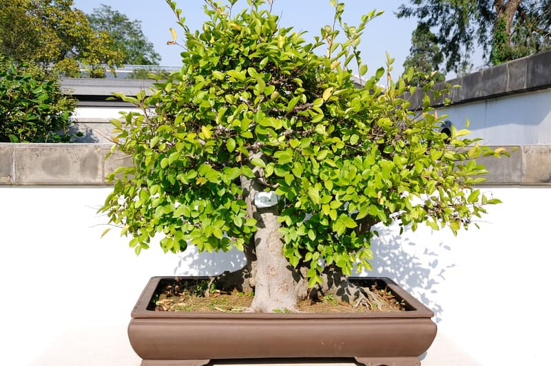 Nutrients Needed for Bonsai Plants to Grow