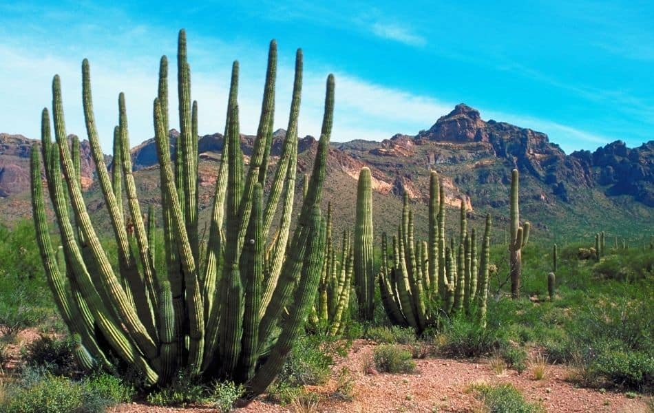 6 Types of Cactus in The African Desert