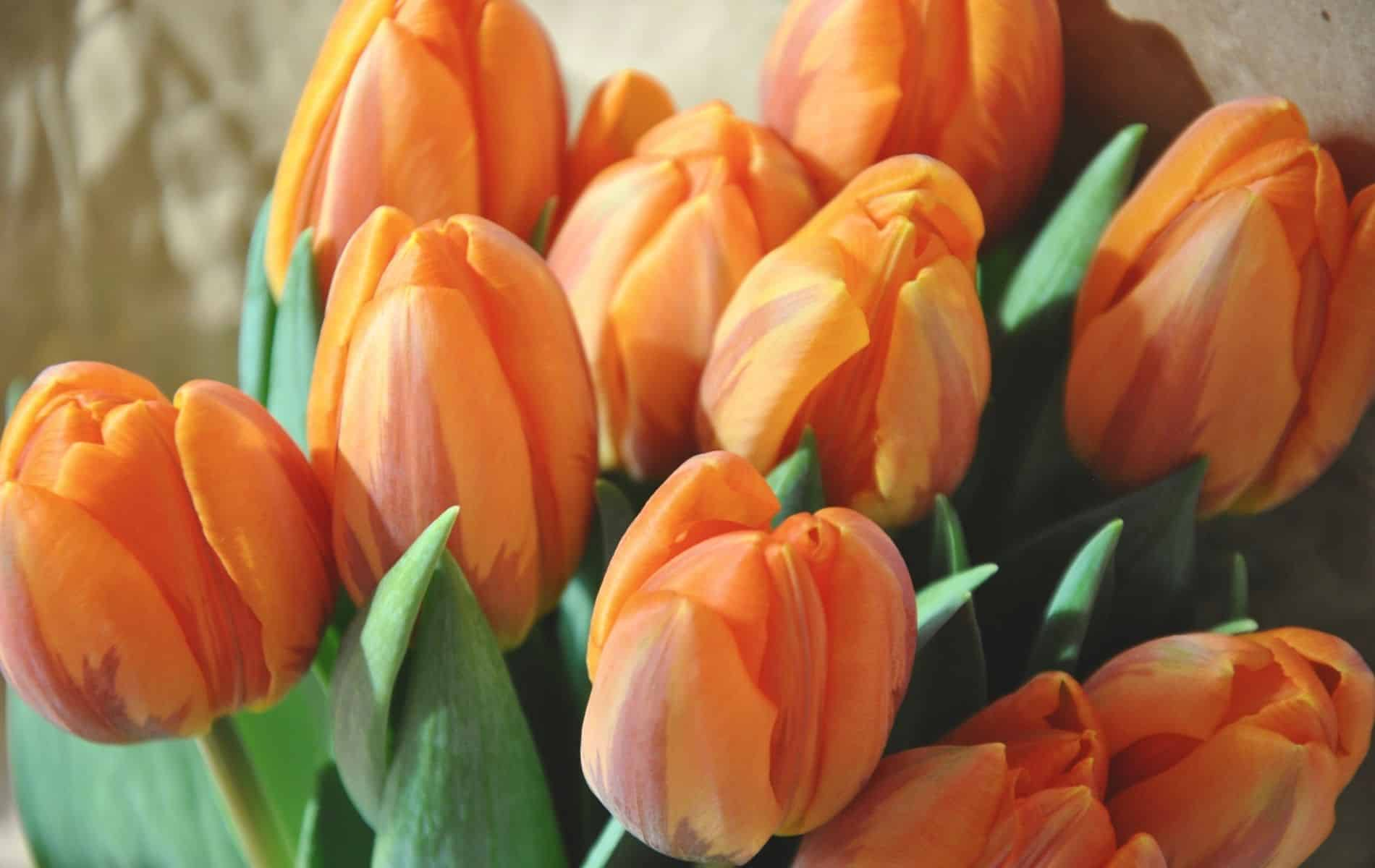 Are Tulips Edible