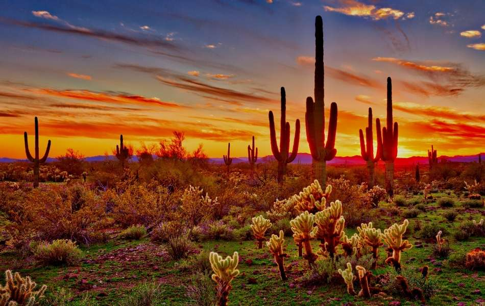 can you cut down a saguaro in your yard