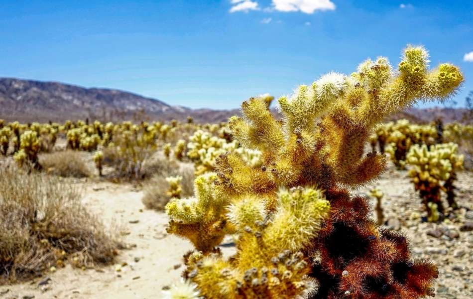 Can You Eat Cactus in the Desert