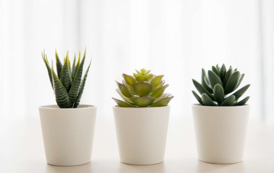 Reasons Why Your Cactus Is Not Growing