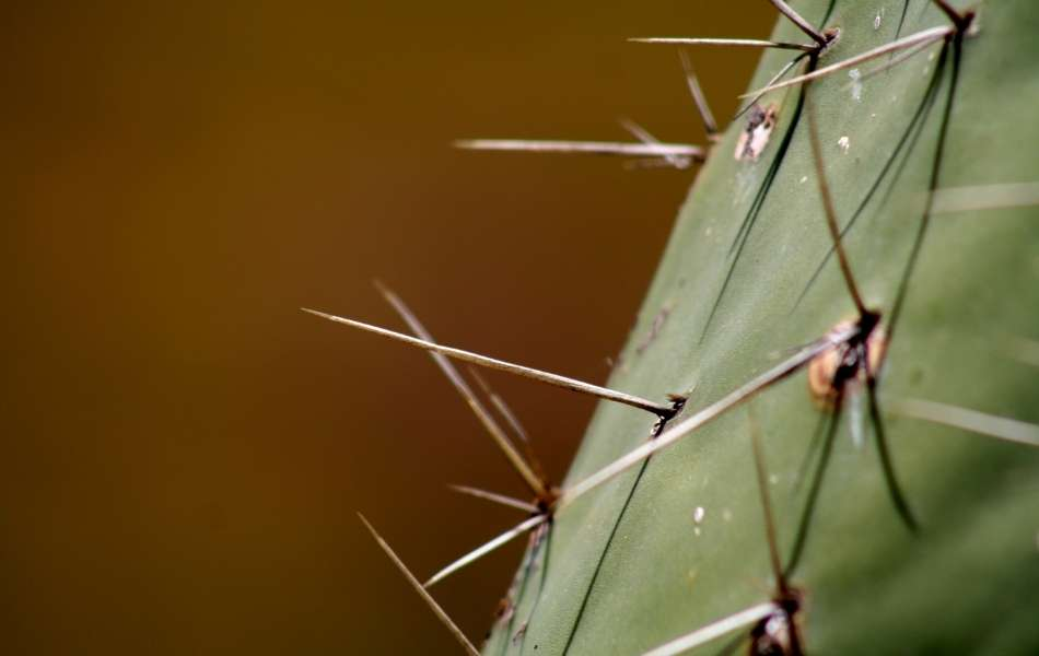 What Happens If You Leave a Cactus Needle In