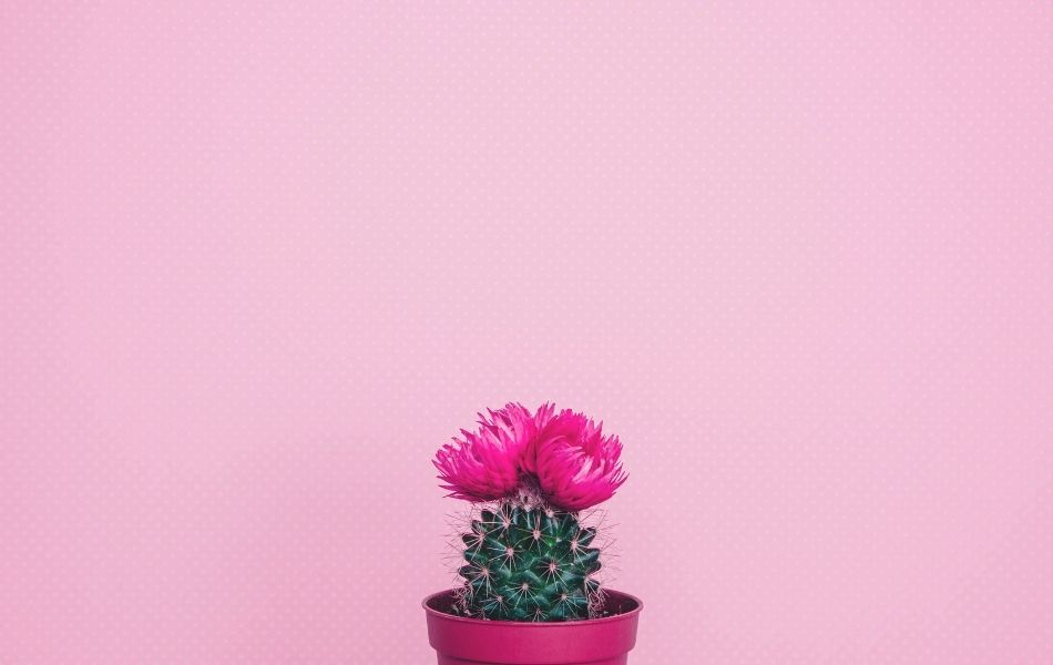 What To Do When Cactus Flowers Dies