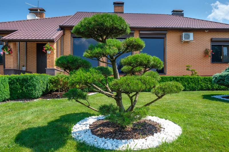 Repotting And Managing Your Bonsai Tree's Roots